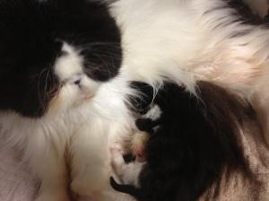 Dbl Stuff and kitten