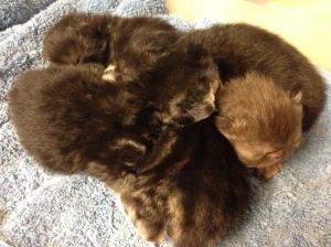 Rain's Kittens