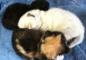 Shania and Ben's kittens