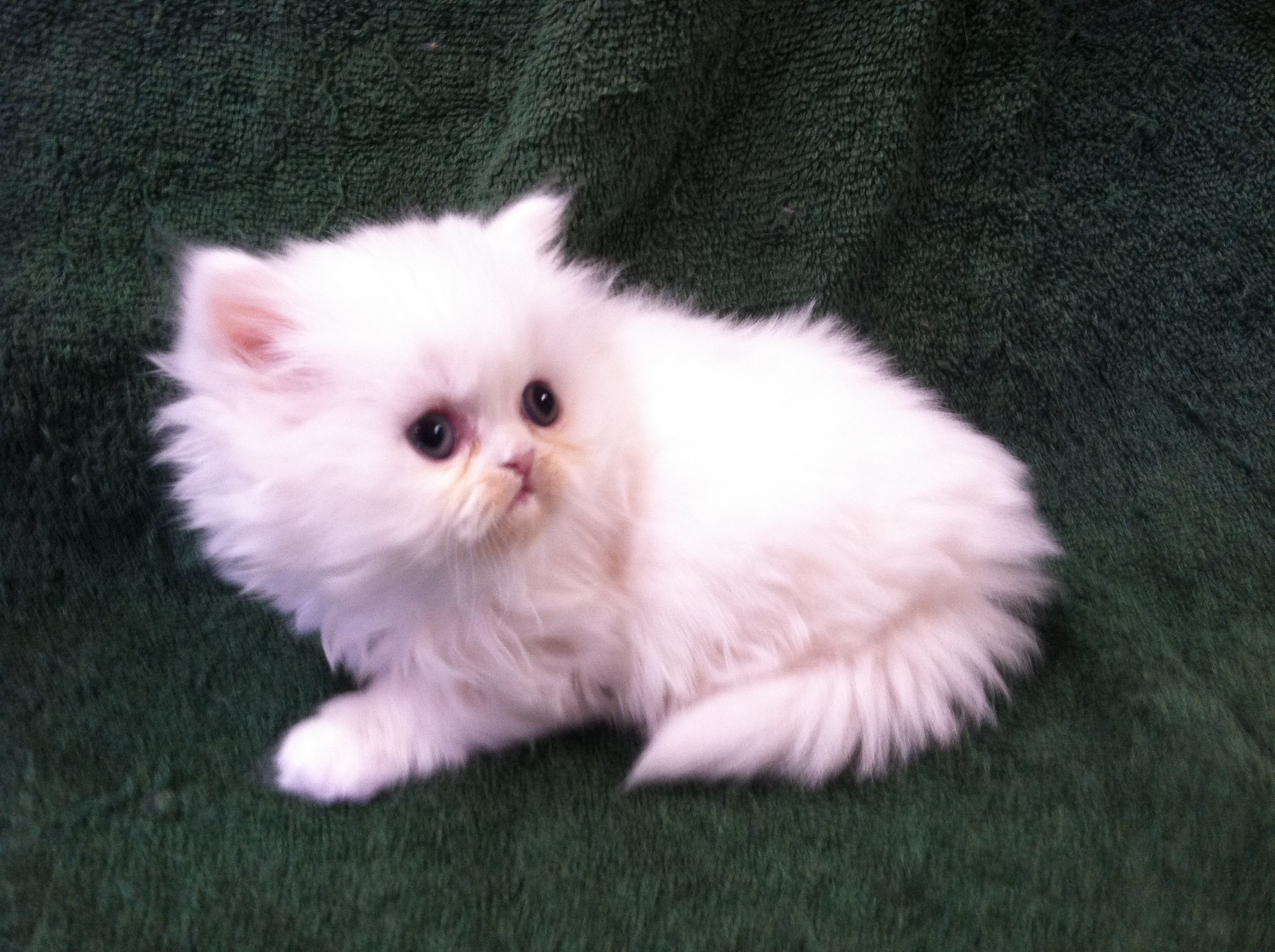 Displaying 20> Images For - Sparkle Kitten...