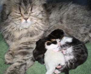 Shinia and babies