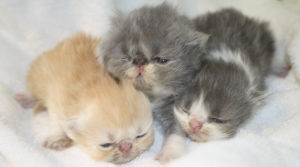 Blossom and Ben's kittens